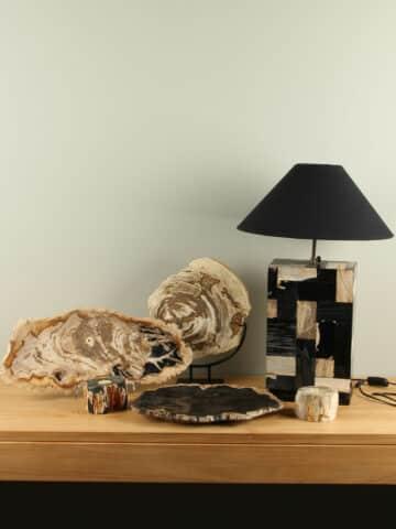 Versteinertes Holz / fossiles Holz