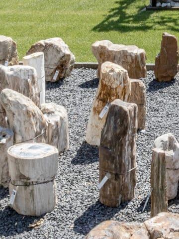 Versteinertes Holz für den Außenbereich